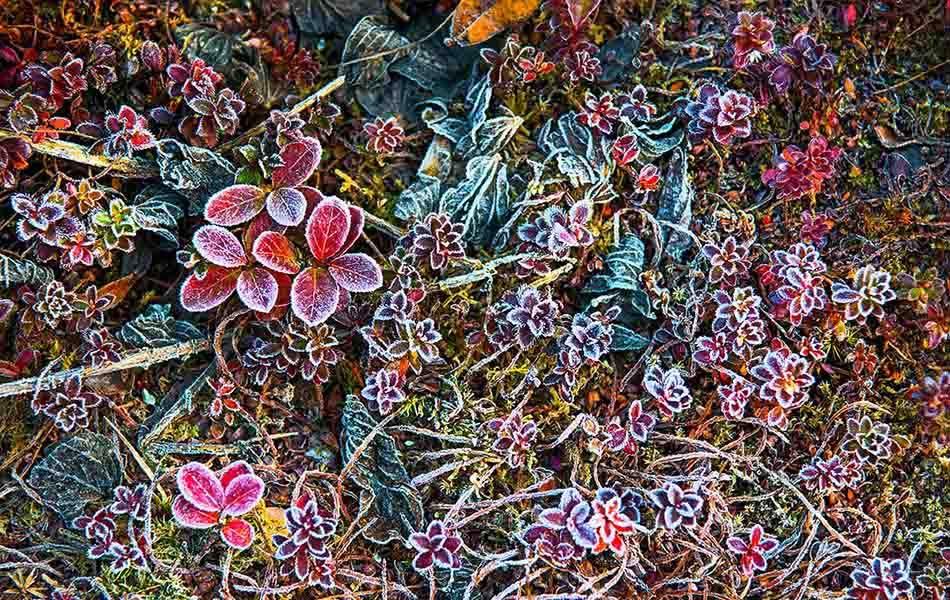 Natura vegetale al Campo Base Operativo in uno scatto artistico di Enrico Ferri