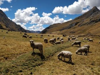 Trekking Cordillera Huayhuash